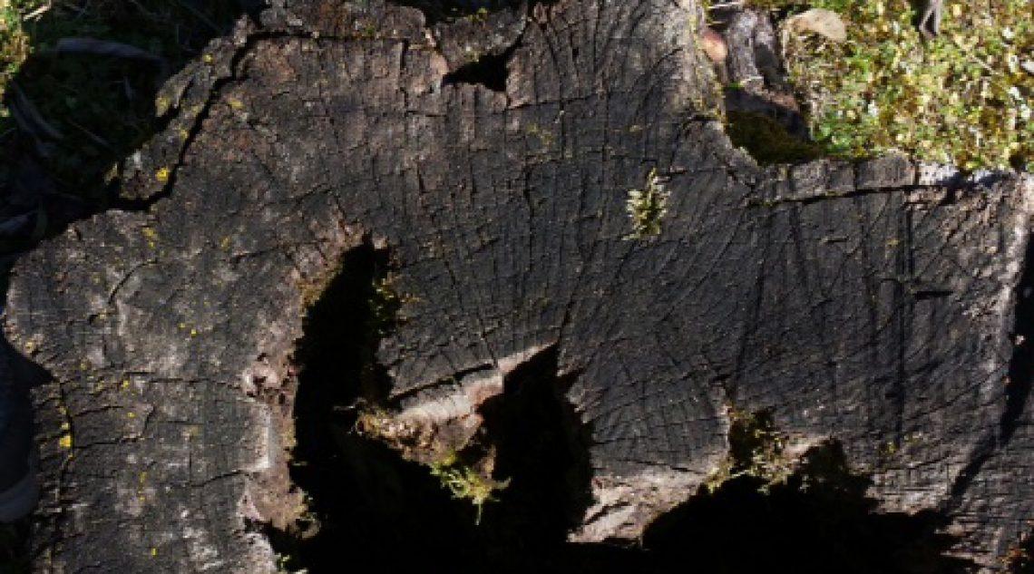 cropped-foto-1-2.jpg