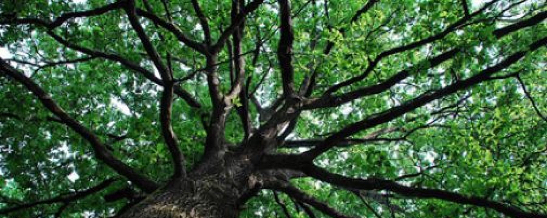 cropped-albero_8.jpg
